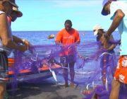Martinique. Aide Exceptionnelle aux entreprises de la pêche et de l'aquaculture marine